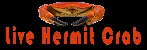 Live Hermit Crab